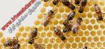 دانلود پروژه کارآفرینی پرورش زنبور عسل
