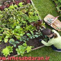 دانلود پروژه کارآفرینی باغداری و پرورش میوه