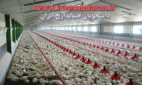 poultry-entrepreneurship-project