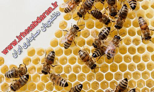pic-honey-bee